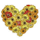 Heart of red and yellow daisies flowers isolated on white background. Vector illustration. Heart of red and yellow daisies flowers isolated on white background Royalty Free Stock Photo