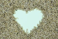 Heart of rice royalty free stock photos