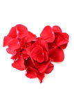 Heart of the rose petals Royalty Free Stock Photography