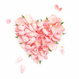 Heart rose-petals royalty free stock photo