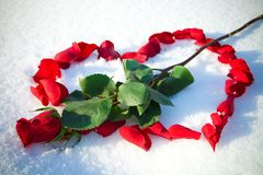 Heart from rose-petals Royalty Free Stock Images