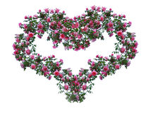 Heart from roses. Royalty Free Stock Photos