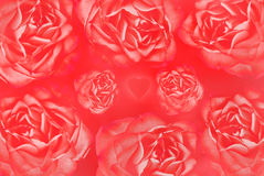 Heart with roses background. Heart with roses on the red background stock illustration