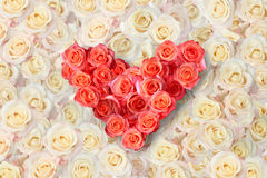 Heart of roses on a background of roses Royalty Free Stock Image