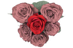 Heart of roses Royalty Free Stock Photos
