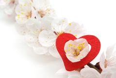 Heart and sakura. Stock Photography
