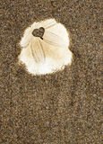 Heart in Sand Dollar Royalty Free Stock Photos