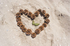Heart on the sand and time. From the cones Stock Photography
