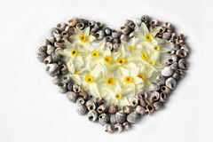Heart of seashells and flowers Royalty Free Stock Photo