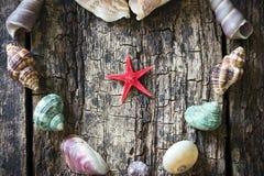 Heart of seashells, shells, shells, starfish closeup Stock Photos