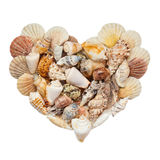 Heart of seashells on a white background Stock Image