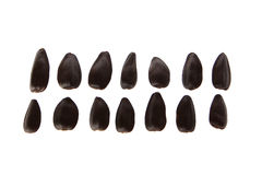 Sunflower and heart. Black sunflower seeds Laid circle Stock Image