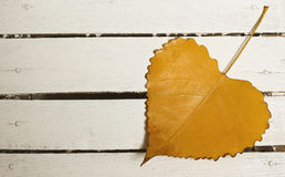 Heart-shape autumn leaf. On old wooden background Stock Photography