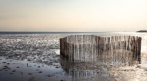 Heart shape bamboo for coast erosion protection by the wave Stock Images