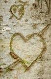 Heart shape on bark tree. Royalty Free Stock Photo