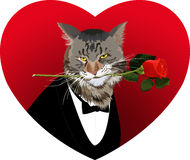 Heart shape, cat and a red rose Royalty Free Stock Photos
