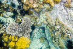 Heart shape coral reef many fish Stock Photo