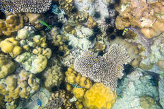 Heart shape coral reef many fish Stock Image
