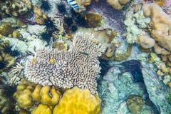 Heart shape coral reef many fish Stock Photos