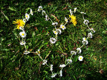 Heart Shape Daisies Royalty Free Stock Images