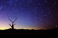 Heart shape of dead tree with star trails movement at night sky. Stock Photography