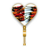 Heart shape filled with chili peppers. Opening heart created from golden fastener and filled with dried chili peppers, on white background Stock Image