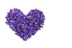 Heart shape flowers. Violets love symbol isolated on white background. Template for greeting card, web design stock photo