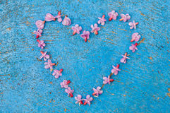 Heart shape formed from daisy flowers on a blue background Royalty Free Stock Image