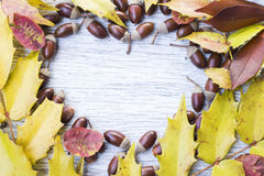 Heart shape frame of acorns and autumn leaves Royalty Free Stock Photography