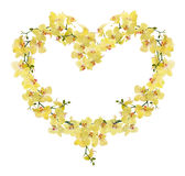 Heart shape frame from yellow orchid flowers Royalty Free Stock Images
