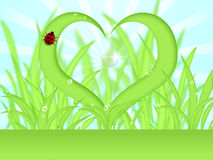 Heart Shape Grass with Dew Drops Stock Photos