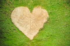 Heart shape on green grass background Stock Images