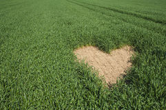 Heart shape on green field Royalty Free Stock Photography