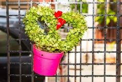 Heart shape hoya leaf in pink pot Stock Image