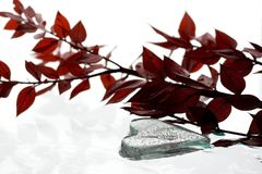 Heart shape ice and red leafs Stock Images