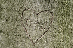 Heart shape with initials carved into tree Stock Image
