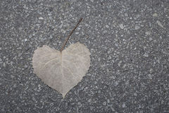 Heart shape leaf in autumn. A heart shape leaf on the sidewalk in autumn Stock Images