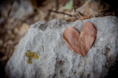 Heart shape leaf. On a boulder Royalty Free Stock Images