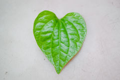 Heart shape leaf. Green heart shape leaf on light gray background Stock Photo