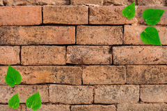 Heart shape leaf on old red brick wall Royalty Free Stock Photos