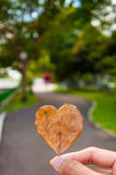 Heart shape leaf with park in background Royalty Free Stock Images