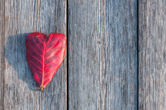 Heart shape leaf on wood background. Love concept Stock Photography