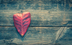 Heart shape leaf on wood background Stock Photography