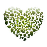 Heart shape leaves with creepers Royalty Free Stock Images