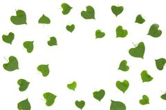 Heart shape leaves frame on white background. Royalty Free Stock Image