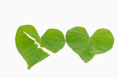 Heart shape leaves Royalty Free Stock Photos