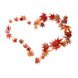 Heart shape made by maple autumn leaves. Isolated on white Stock Photos