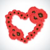Heart shape made from poppy flowers on white background. Royalty Free Stock Image