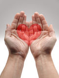 Heart Shape in male hands Stock Image