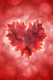 Heart Shape Maple Leaves Red Background Stock Photography